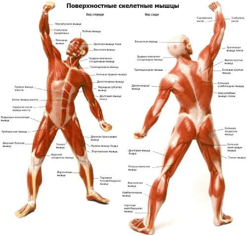 Профессиональный курс обучения массажу