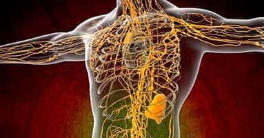 Влияние массажа на лимфатическую систему